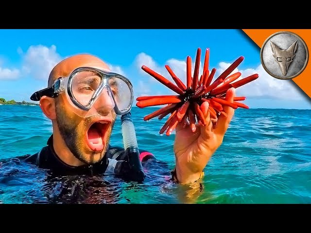 Fantastic Sea Creatures...and Where to Find Them!