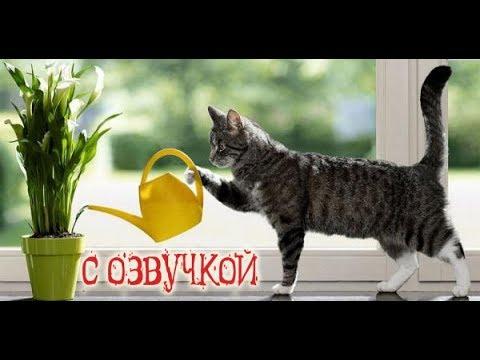 Приколы с котами с ОЗВУЧКОЙ – смешные животные и МЕМЫ 2018 от Domi Show