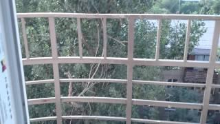 Двухкомнатная квартира, окна на север, ЖК