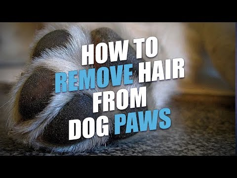 how-to-remove-hair-from-dog-paws-(the-easy-way)