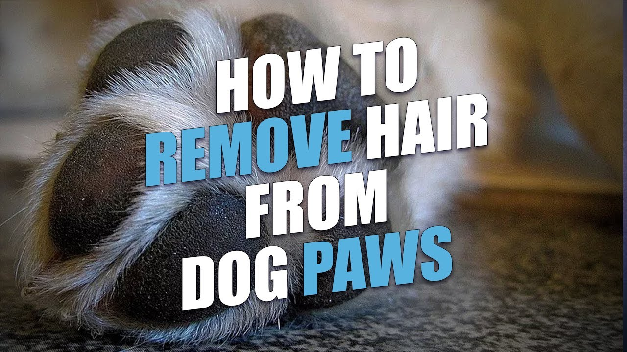 How to Remove Hair from Dog Paws (The Easy Way)
