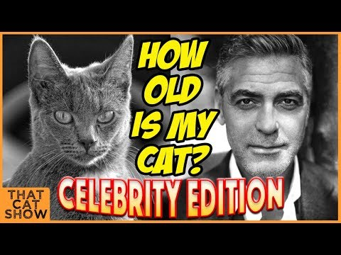 How Old Is My Cat? - Funny Cat Videos - That Cat Show!