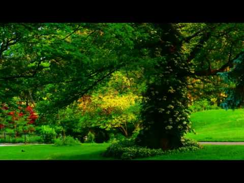 Relaxation Music for Epilepsy - soothing relaxing music for healing - Epilepsy Portal Sanctuary