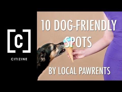 10 Dog Friendly Spots In LA By Local Pawrents