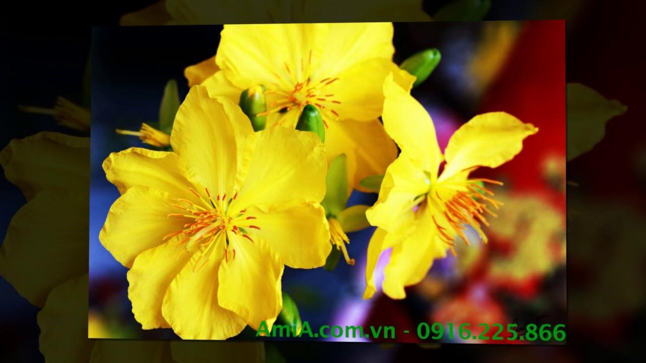 10 ảnh hình nền hoa mai vàng làm tranh Tết cực đẹp phần 2 tet p2