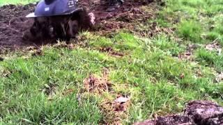 Glebogryzarka Elektryczna MacAllister Film