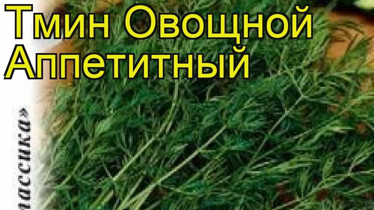 Семена черного тмина используются во многих медицинских и кулинарных рецептах. Также как и масло черного тмина его семена являются.