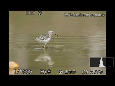 Sony a6400 Real-time Tracking wild bird AF-C test