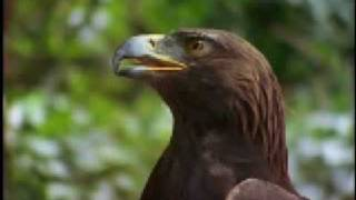 On The Wings Of An Eagle-John Denver