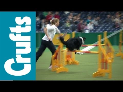 Crufts Agility Funny Clips