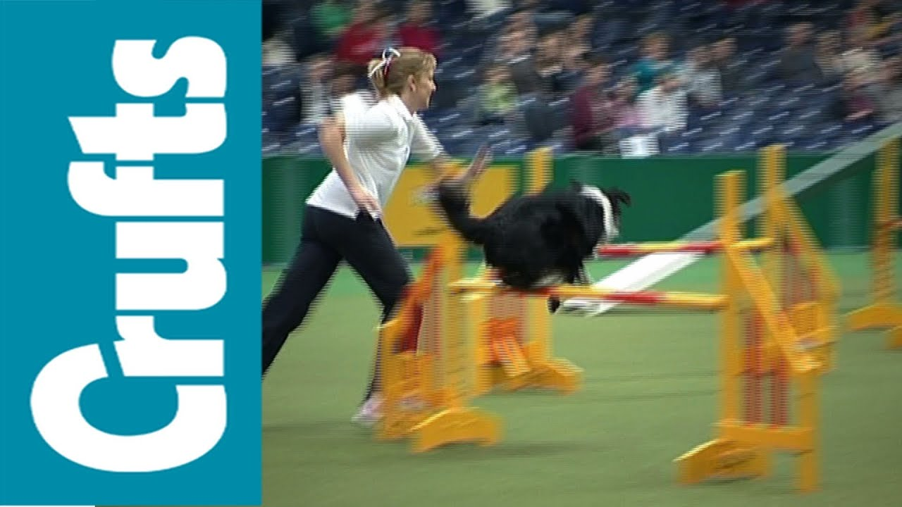 Which Breed Is The Fastest Flyball Dog
