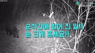 [한국농수산TV] 한 공무원이 멧돼지를 퇴치시킨 기막힌 실화!! 경기도 광주시 남한산성면 - 멧돼지 퇴치기 카다로그 보기 아래