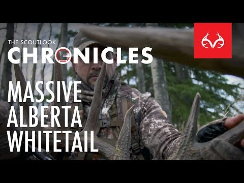 Hunting A Massive Alberta Whitetail Deer