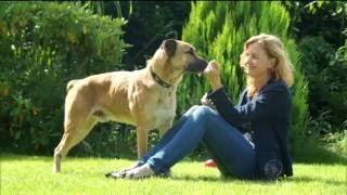 Conheça a linda história entre uma aeromoça e um cão vira-lata de Buenos Aires