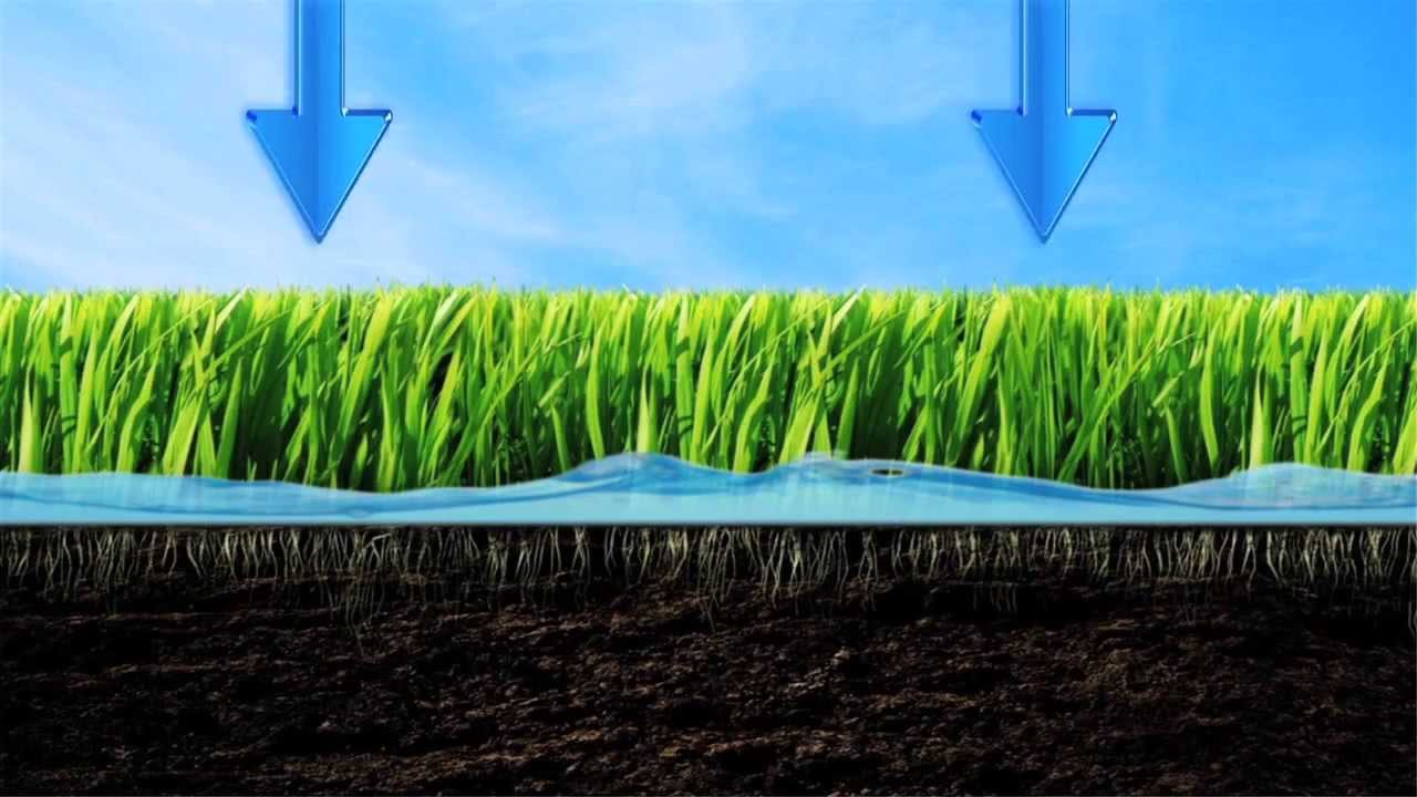 be water smart  lawn watering tips, Natural flower