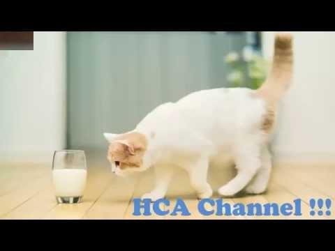 10 Alimentos Que No Debes Darle a Tu Gato