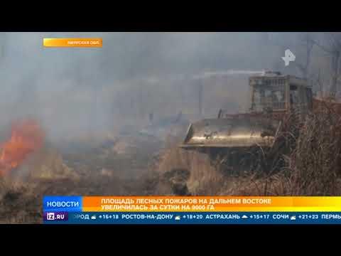 Площадь лесных пожаров на Дальнем Востоке за сутки увеличилась на 9 тыс. гектаров