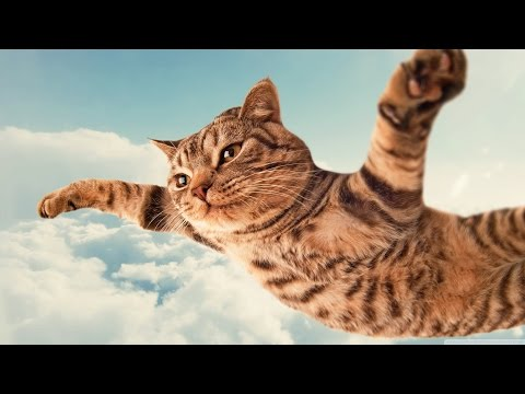 Смешные коты и кошки. Прикольные видео #12 /  2015 - Ржачные видео приколы