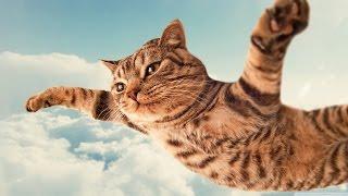 прикольное видео про кошку