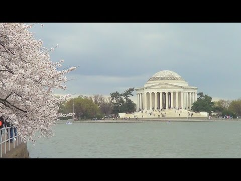 Cherry Blossom Festival at the Tidal Basin, Washington DC - Episode 226