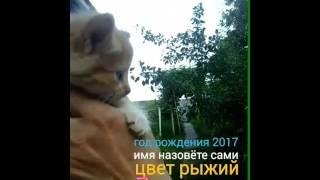 Отдам котят в хорошие руки 2017!