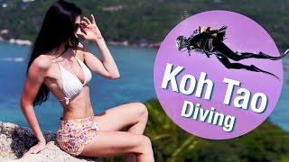 Diving Koh Tao 🐠 | FreshMania Travel