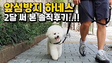 앞섬방지 하네스 2달동안 써 본 솔직후기!!!