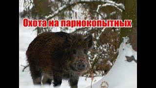 Охота на парнокопытных, выпуск№31 (RUS)