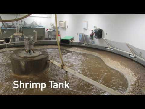 Farm Raised vs Wild Caught Fish