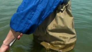 南芦屋浜潮干狩り水中映像です!! 実際に掘った時間、ほんの5分です。...