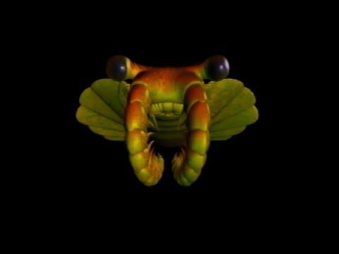 Anomalocaris: Earth's First Predator