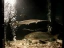 thelope.com: Kansas Department of Wildlife and Parks' aquarium at the Kansas State Fair