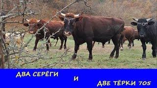 КОП В КРЫМУ с X-TERRA 705