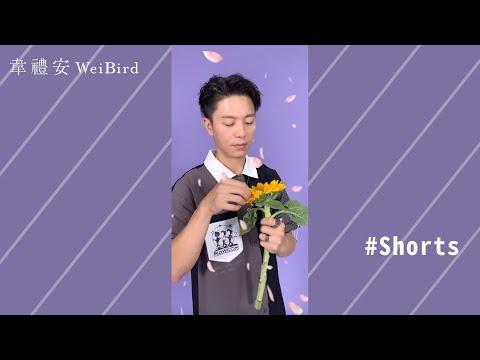 「袋鼠搖手」來換一首歌試試看!#Shorts #忽然|韋禮安 WeiBird