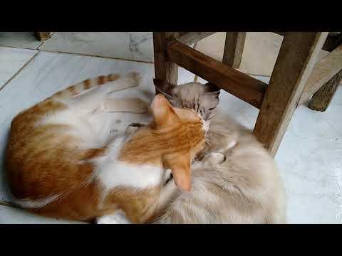 Dois gatinhos namorando muito