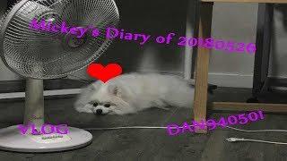 Baixar Mickey's Diary of 20180526 [Vlog]