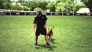 Flying Disc Dog - Familiarity - Pro Plan P5 Training