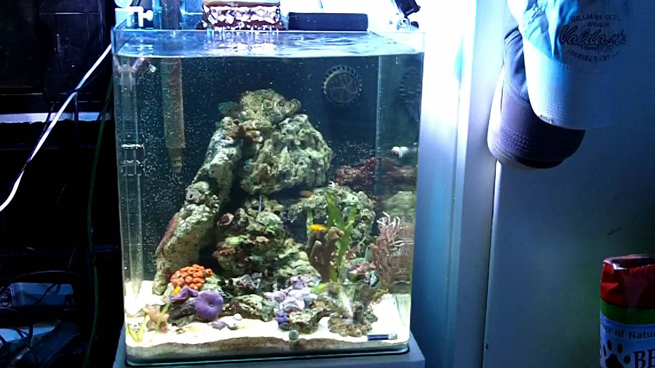 dennerle nano cube reef tank i firing up metal halide. Black Bedroom Furniture Sets. Home Design Ideas