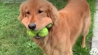 National Dog Day 2020: 5 Dog Videos To Brighten Your Day