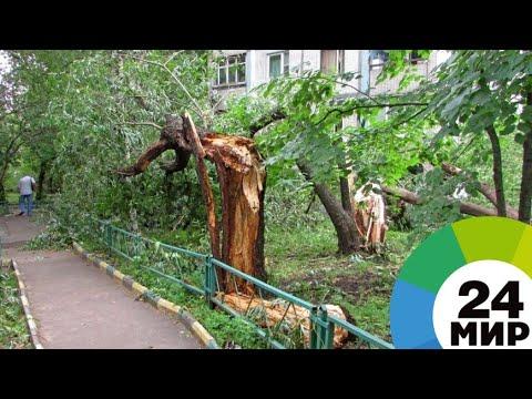 Разрушительный ураган в Лесосибирске повалил деревья и оставил без света 15 тысяч человек