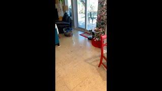 Doggo Riding Around The House On a Roomba