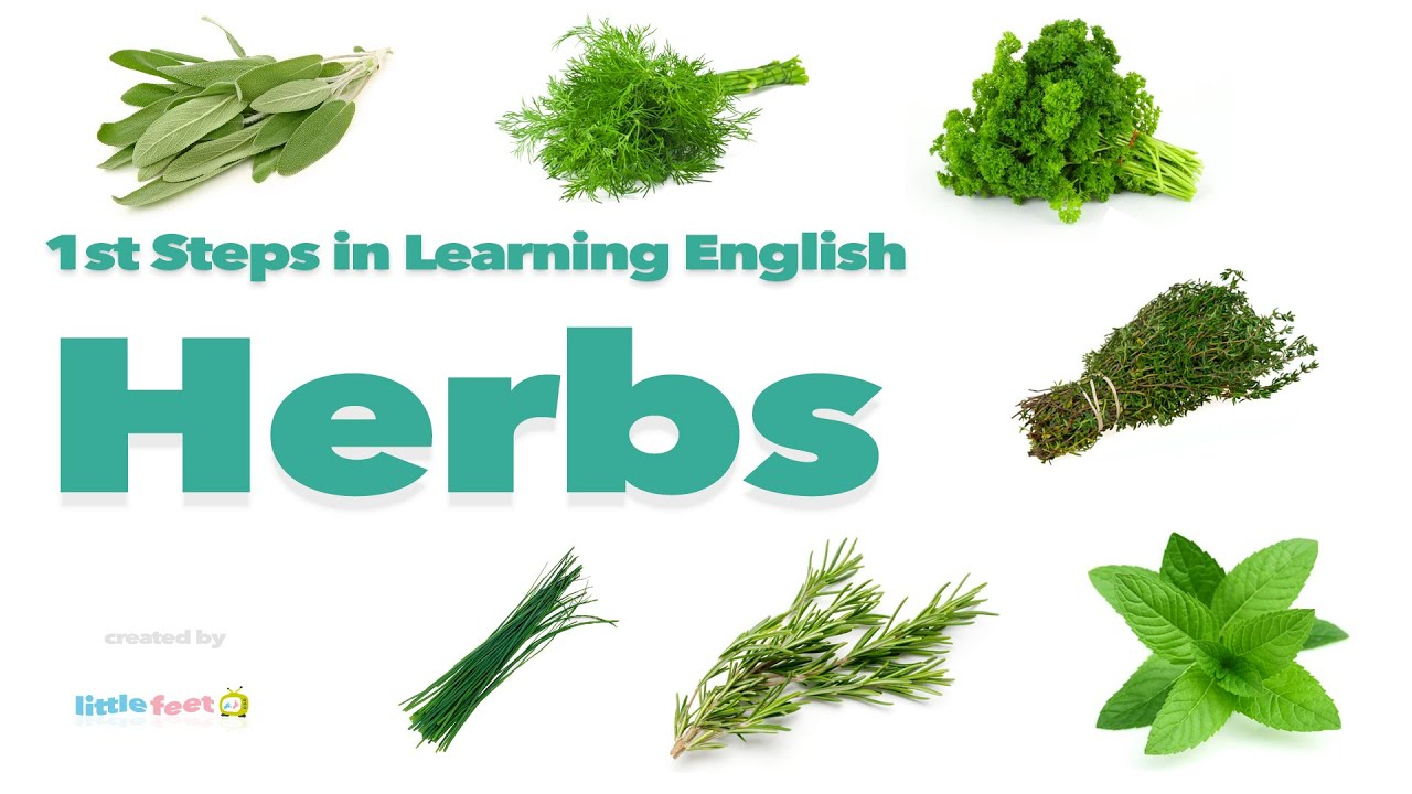 Pronounce 11 Herbs in British English | Vocabulary with Pictures ...