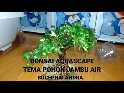 bonsai-mini-aquascape-dengan-tema-pohon-jambu-air