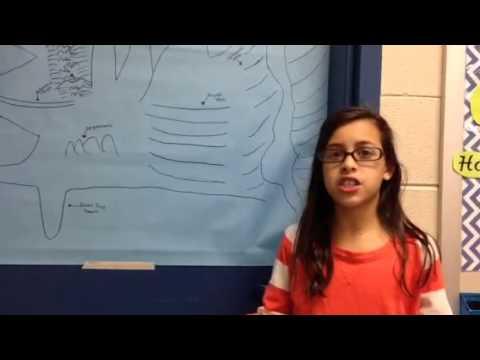 Will Ocean Floor Project Youtube