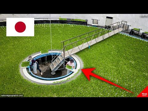 """Saking Canggih dan Maju Negaranya, Begini Cara Jepang """"Melawan Alam"""""""