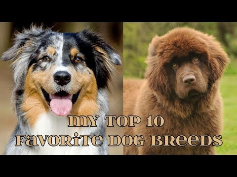 My Top 10 Favorite Dog Breeds