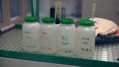 In Vitro-Vermehrung, Erstellung des Nährmediums
