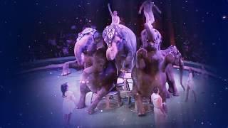 """Цирк на Фонтанке. Юбилейная программа """"Желание летать"""""""