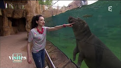 Popular Videos - ZooParc de Beauval & News