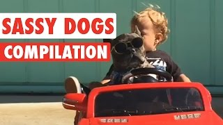 Sassy Dogs Video Compilation 2016